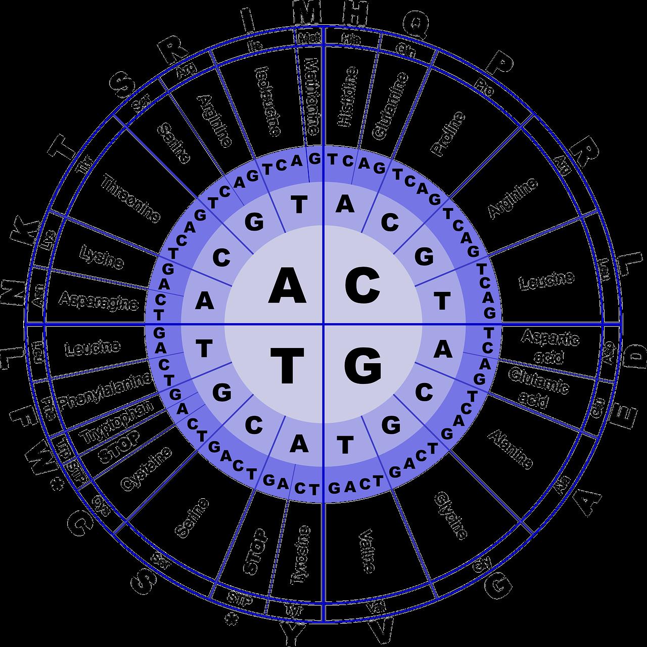 BCAAs + L-Glutamina + Vitamina B6 (suplementación)